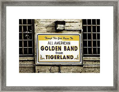 Tigerland Band Framed Print by Scott Pellegrin