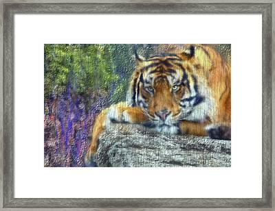 Tigerland Framed Print