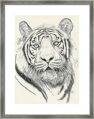 Tigerlily Framed Print by Barbara Keith