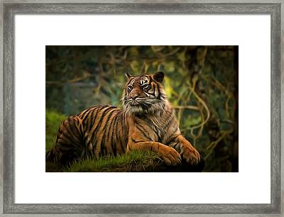 Framed Print featuring the photograph Tigers Beauty by Scott Carruthers