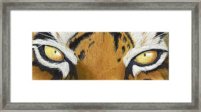 Tigers Eye Framed Print by Laurie Bath