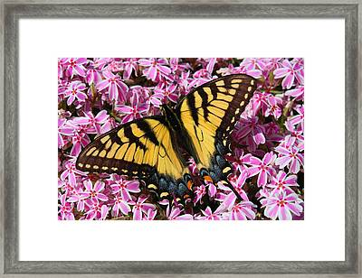 Tigers On The Loose Framed Print by Kathryn Meyer
