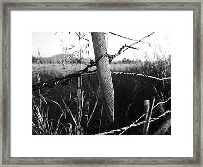 Tight Enough? Framed Print