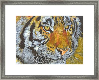 Tigress Framed Print by Angela   Cater