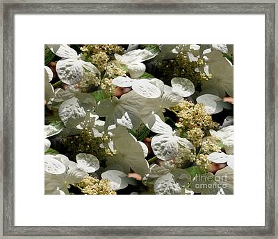 Framed Print featuring the photograph Tiled White Lace Cap Hydrangeas by Smilin Eyes  Treasures
