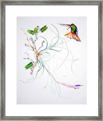 Tillandsia Baileyi Framed Print by Sue Sill