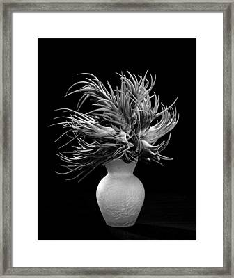 Tillandsia Framed Print by Gary Cloud
