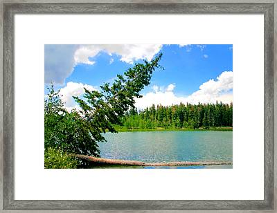 Timber Framed Print by Kristin Elmquist