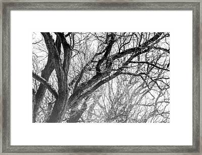 Timber Tentacles Framed Print by Az Jackson