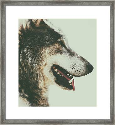 Timber Wolf Framed Print by Martin Newman