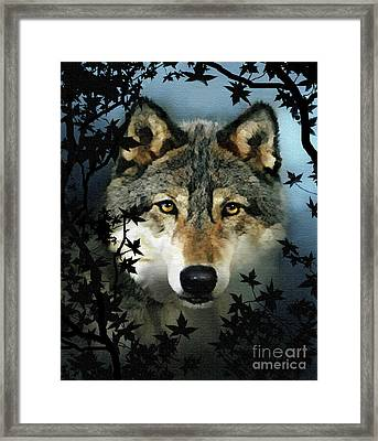 Timber Wolf Framed Print by Robert Foster