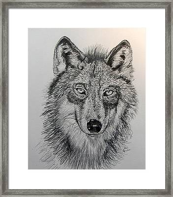 Timber Wolf Framed Print by Stan Hamilton