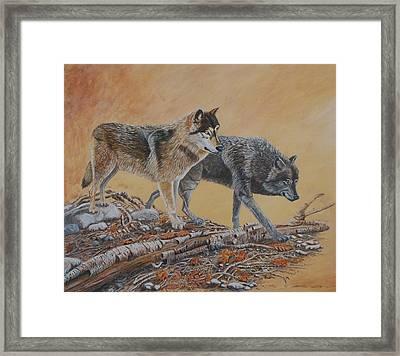 Timber Wolves Framed Print by Santo De Vita