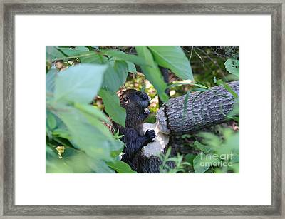 Timberrrrr Framed Print