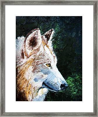 Timberwolf Framed Print by Stan Hamilton
