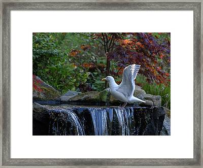 Time For A Bird Bath Framed Print