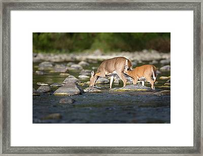 Time For A Drink Framed Print by Bill Wakeley