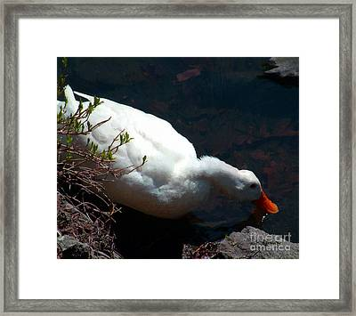 Time For A Drink Framed Print by RC DeWinter