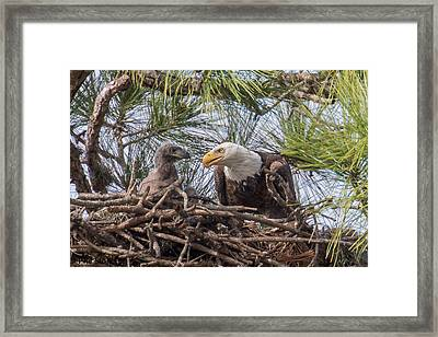 Time For A Father-son Talk Framed Print by Phil Stone