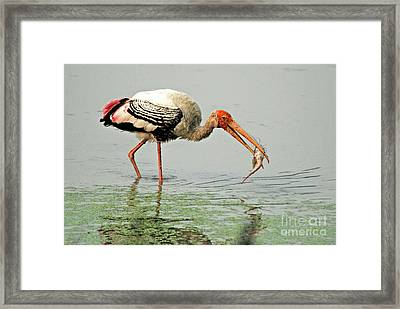 Time For A Meal Framed Print