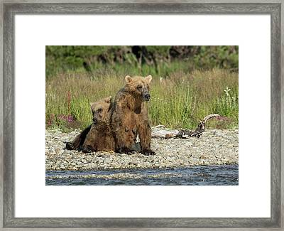 Framed Print featuring the photograph Time For A Nap by Cheryl Strahl