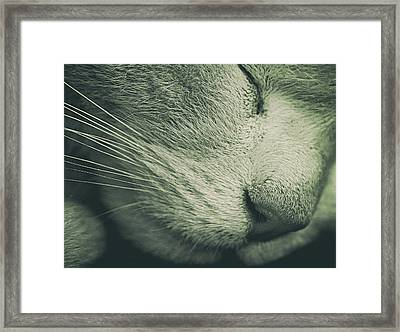Time For A Nap Framed Print