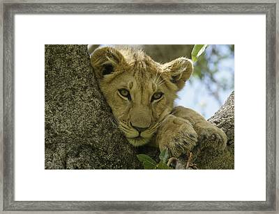 Time For A Nap Framed Print by Michele Burgess
