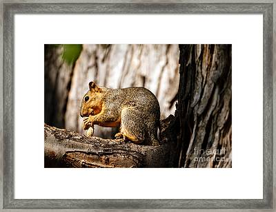 Time For A Peanut Framed Print by Robert Bales