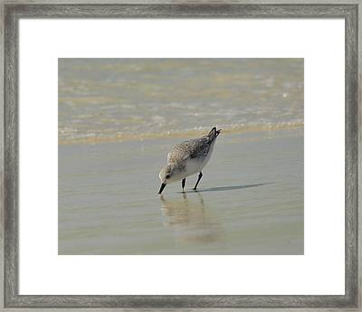 Time For A Snack Framed Print