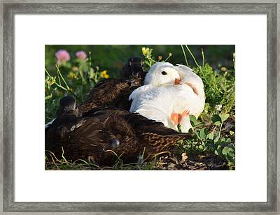 Time For Bed Framed Print by Bonnie Bruno