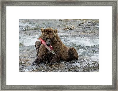 Framed Print featuring the photograph Time For Lunch by Cheryl Strahl