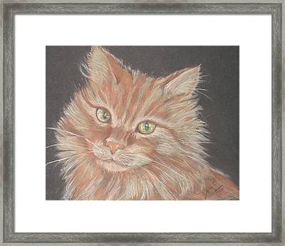 Time For Your Closeup Miss Tia Framed Print by Sandra Valentini
