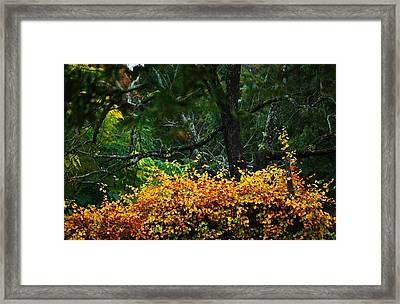 Time Of Change Framed Print by Trudi Southerland