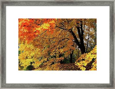 Time Of The Season Framed Print
