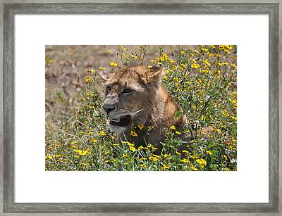 Time To Eat Framed Print by Joe  Burns
