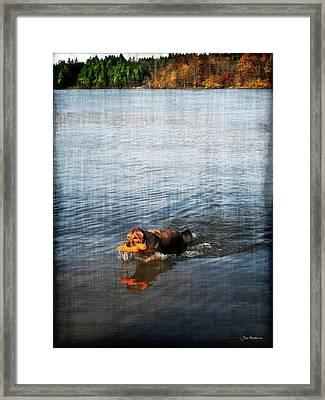 Time To Fetch Framed Print by Joan  Minchak