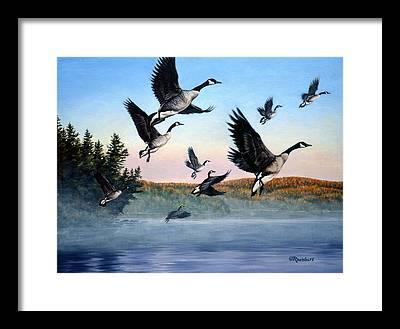 Goose Framed Prints