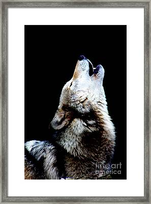Time To Howl Framed Print by Nick Gustafson