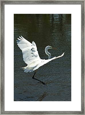 Time To Land Framed Print