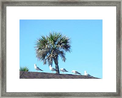 Time To Rest Framed Print by Francis Roberts ll