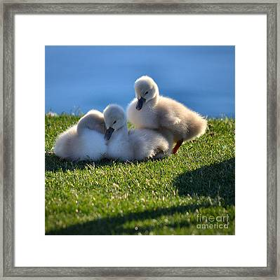 Time To Snuggle Framed Print by Deb Halloran