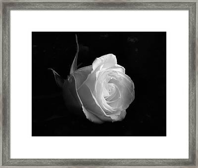 Timeless Beauty Framed Print by Roy McPeak