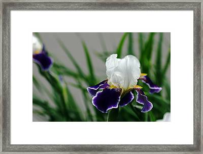 Timeless Eloquence Framed Print by Debbie Oppermann