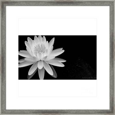Black And White -timeless Lily Framed Print