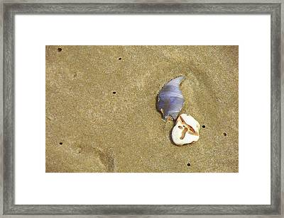 Timeless Nature Framed Print by JAMART Photography