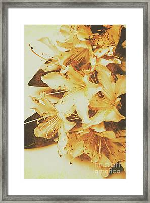 Timeless Romance Framed Print by Jorgo Photography - Wall Art Gallery