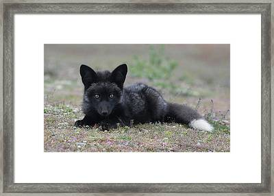 Here's Looking At You Framed Print by Elvira Butler