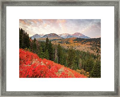 Timp With Red Oak Framed Print by Johnny Adolphson