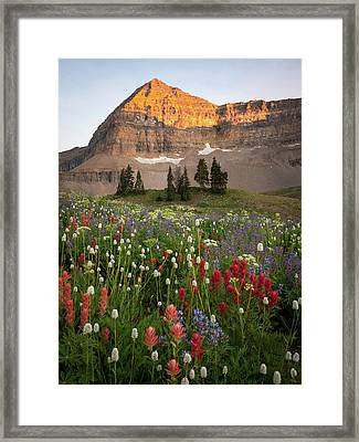 Timpanogos Bouquet Framed Print