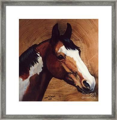 Tingeys Fancy   Paint Horse Framed Print by JoAnne Corpany